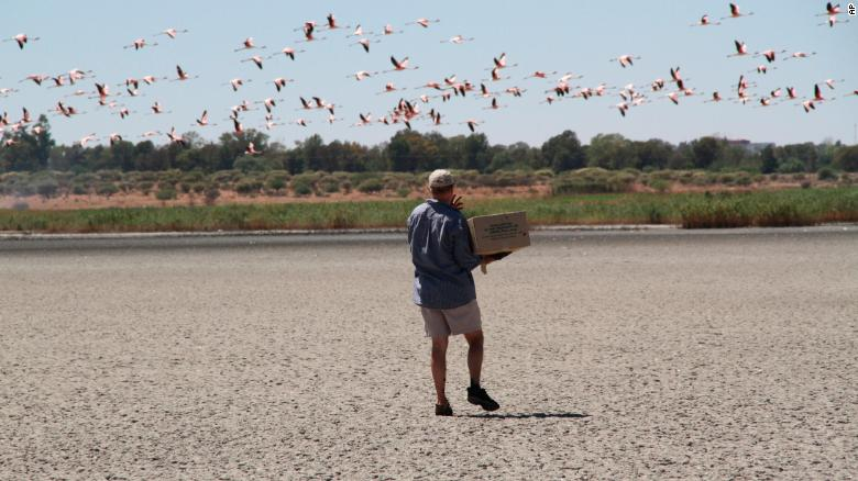 A volunteer collects flamingo chicks at the Kamfers Dam near Kimberley, South Africa.