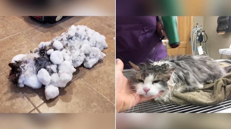 879af2917db Frozen feline thawed out after being found in a snowbank - CNN