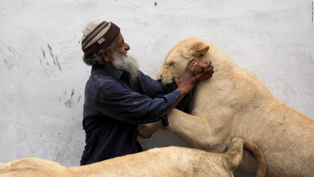 Mamy, a caretaker, plays with a pet lion in an enclosure built on the outskirts of Peshawar, Pakistan, on Monday, February 4.