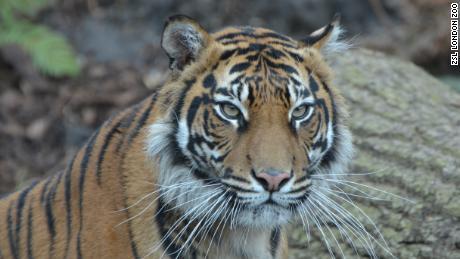 Tiger Tiger snelheid dating Manchester kanker man single