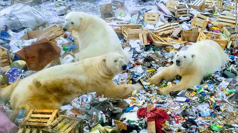 Polar bears invading Russian town on