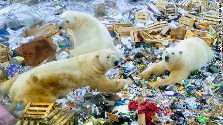 polar beer and city ile ilgili görsel sonucu