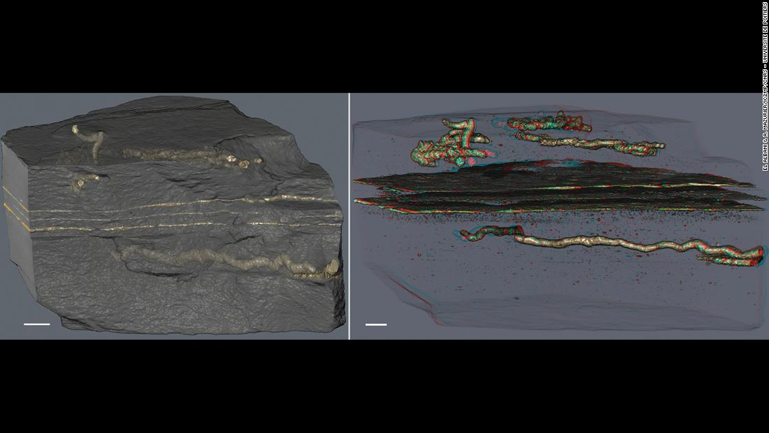 The oldest evidence of mobility is 2.1 billion years old and was found in Gabon. The tubes, discovered in black shale, are filled with pyrite crystals generated by the transformation of biological tissue by bacteria, found in layers of clay minerals.
