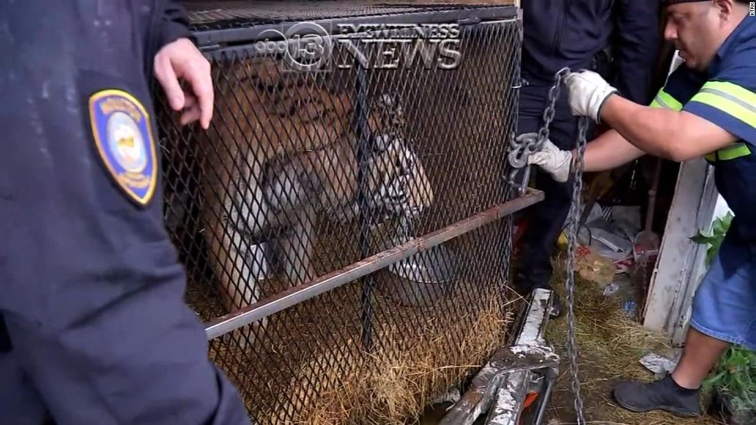 They went to an abandoned home to smoke weed. Inside, they found a tiger.