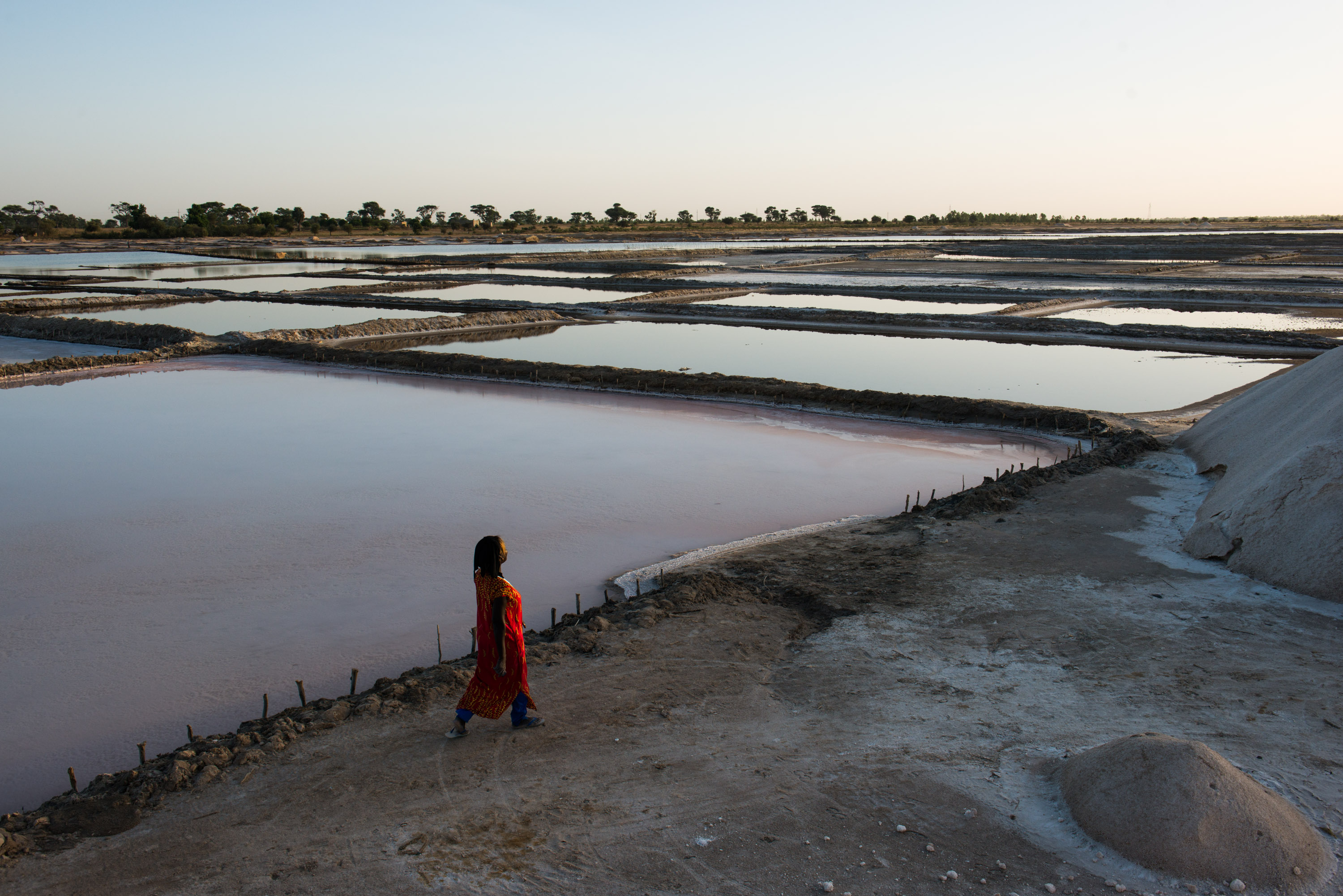 Diouf walks along the edge of irrigation pools at her salt flat in Fatick. In the coming months, the water will evaporate, leaving salt behind.