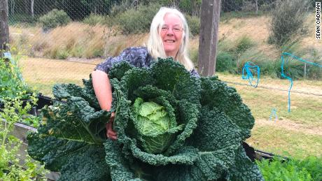 Rosemary Norwood and her husband grew a giant cabbage at their eco-tourism guesthouse in the Australian state of Tasmania