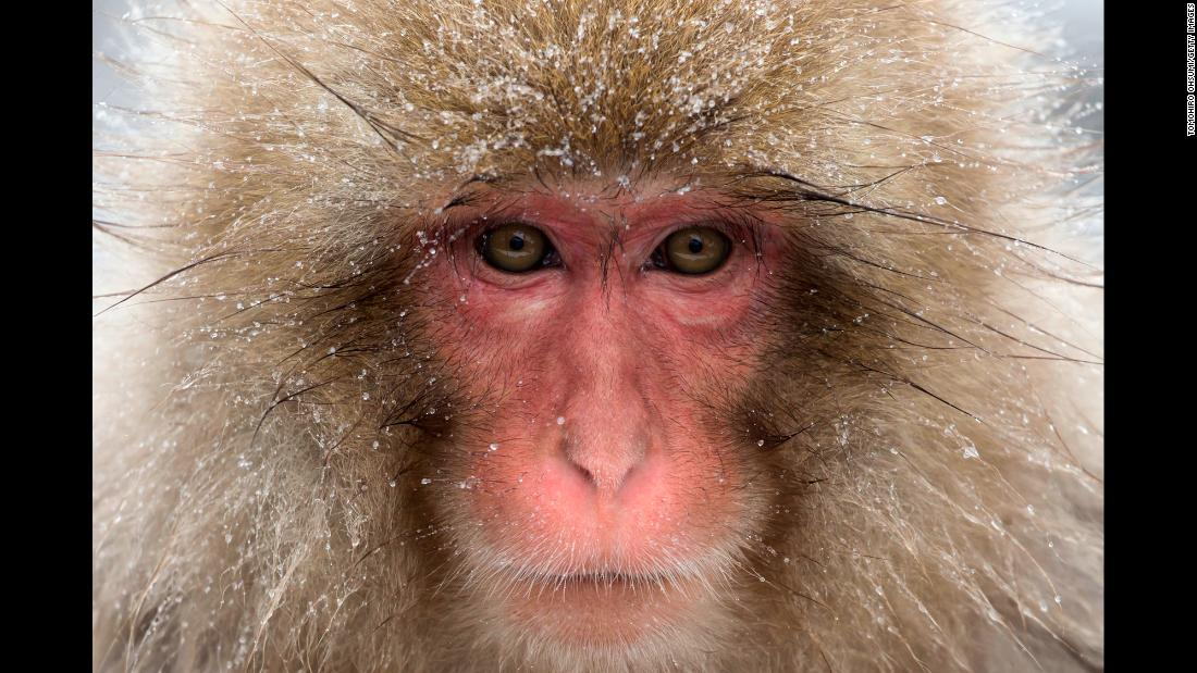 A macaque bathes in a hot spring at a monkey park in Yamanouchi, Japan, on Friday, February 8.