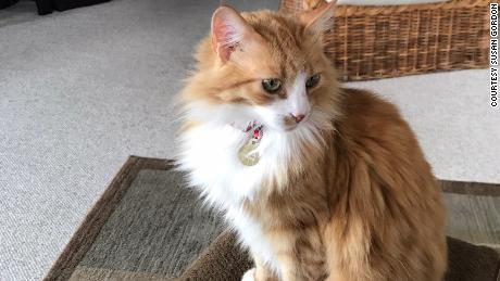 Peaches the cat is missing.