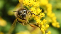 The 'farmhacker' digitizing how bees are monitored