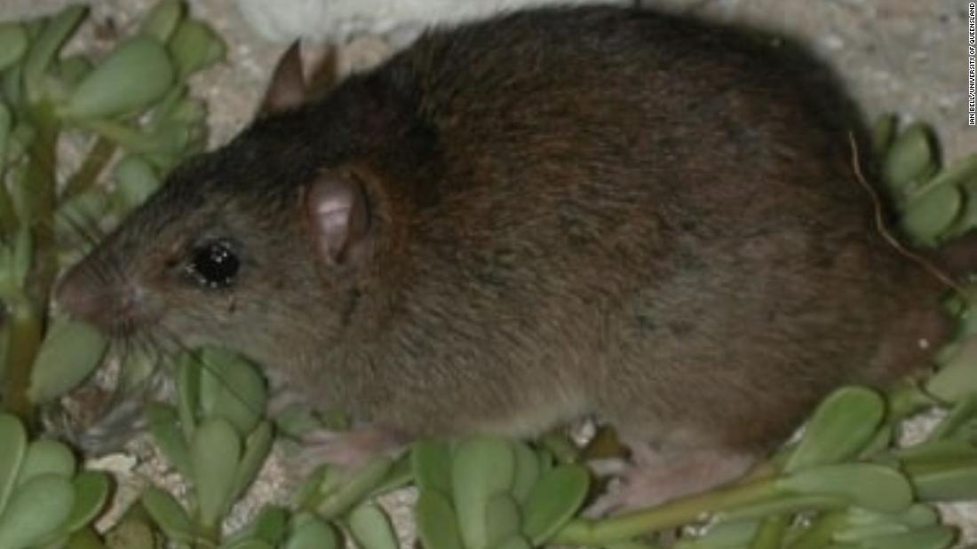 Climate change claims its first mammal