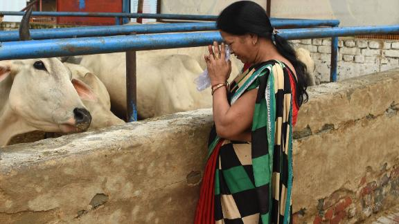In this photograph taken on July 23, 2017 an Indian devotee prays to cows at the 'Sri Krishna' cow shelter in Bawana, a suburb of the Indian capital New Delhi.