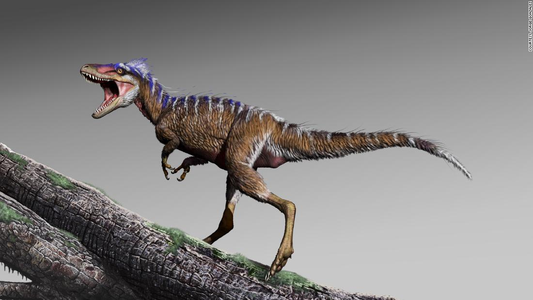 An artist's illustration of what the small tyrannosaur Moros intrepidus would have looked like 96 million years ago. These small predators would eventually become Tyrannosaurus rex.