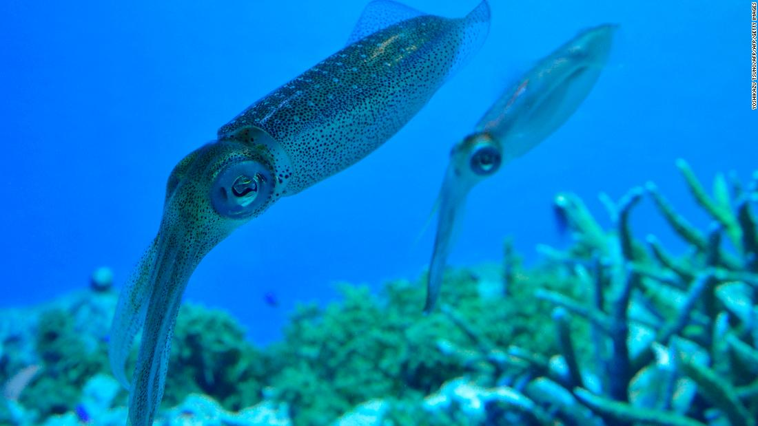 Could squid protein be an eco-friendly answer to our plastic problem?