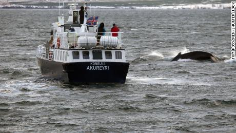 1,400 dolphins were killed in the Faroe Islands in one day, even shocking some pro-whalers
