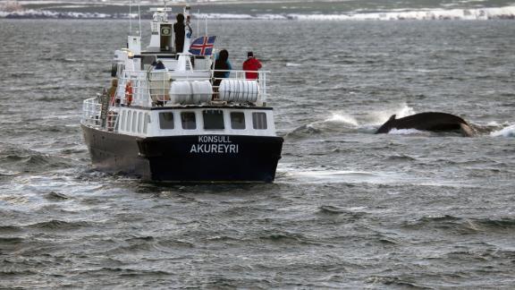 'Konsull' whale watching, Eyjafjördur, Akureyri, Iceland. Iceland in November 2017