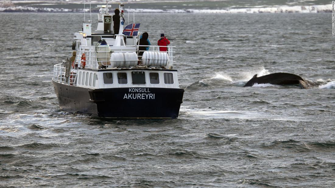 Iceland to let more than 2,000 whales be killed within the next five years