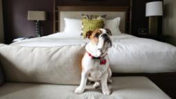 Top pet-friendly hotels around the globe