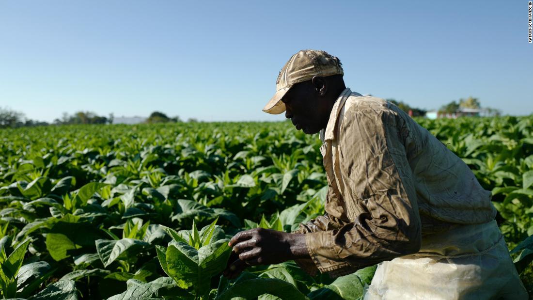 Cuba's tobacco growers confront climate change