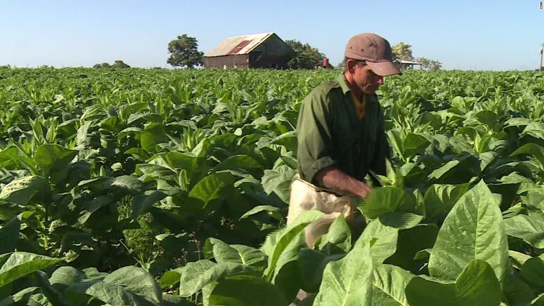Cuba's tobacco growers confront climate change