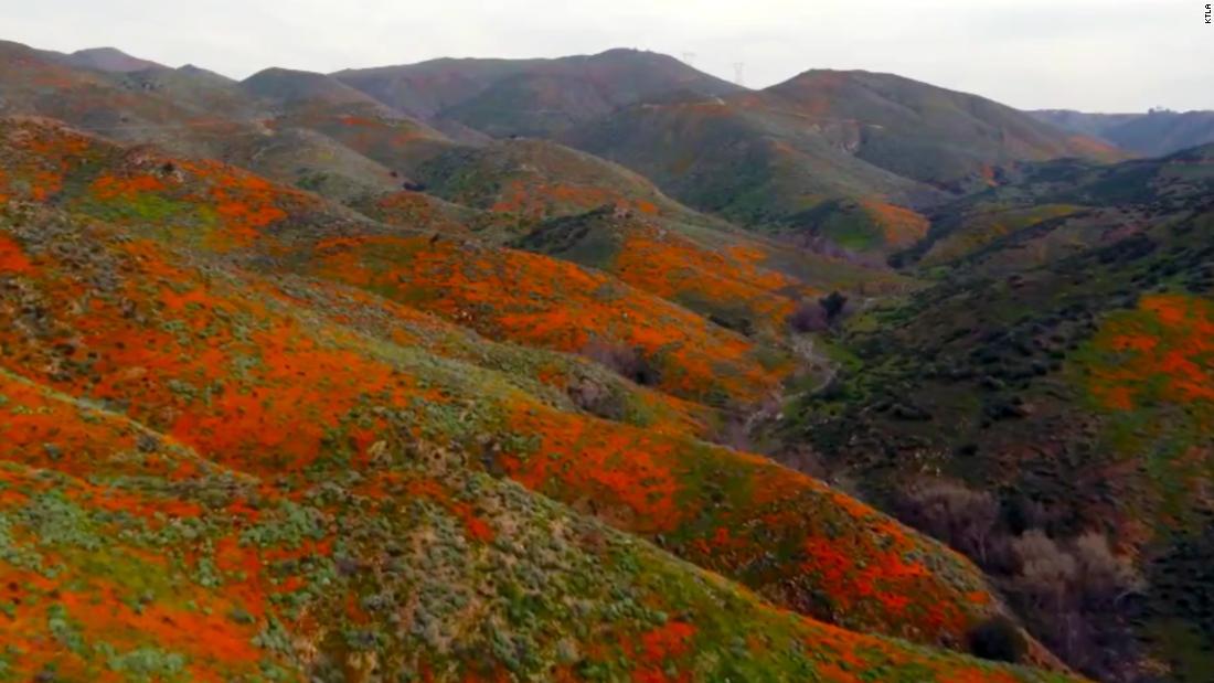Super bloom turns into tourist nightmare