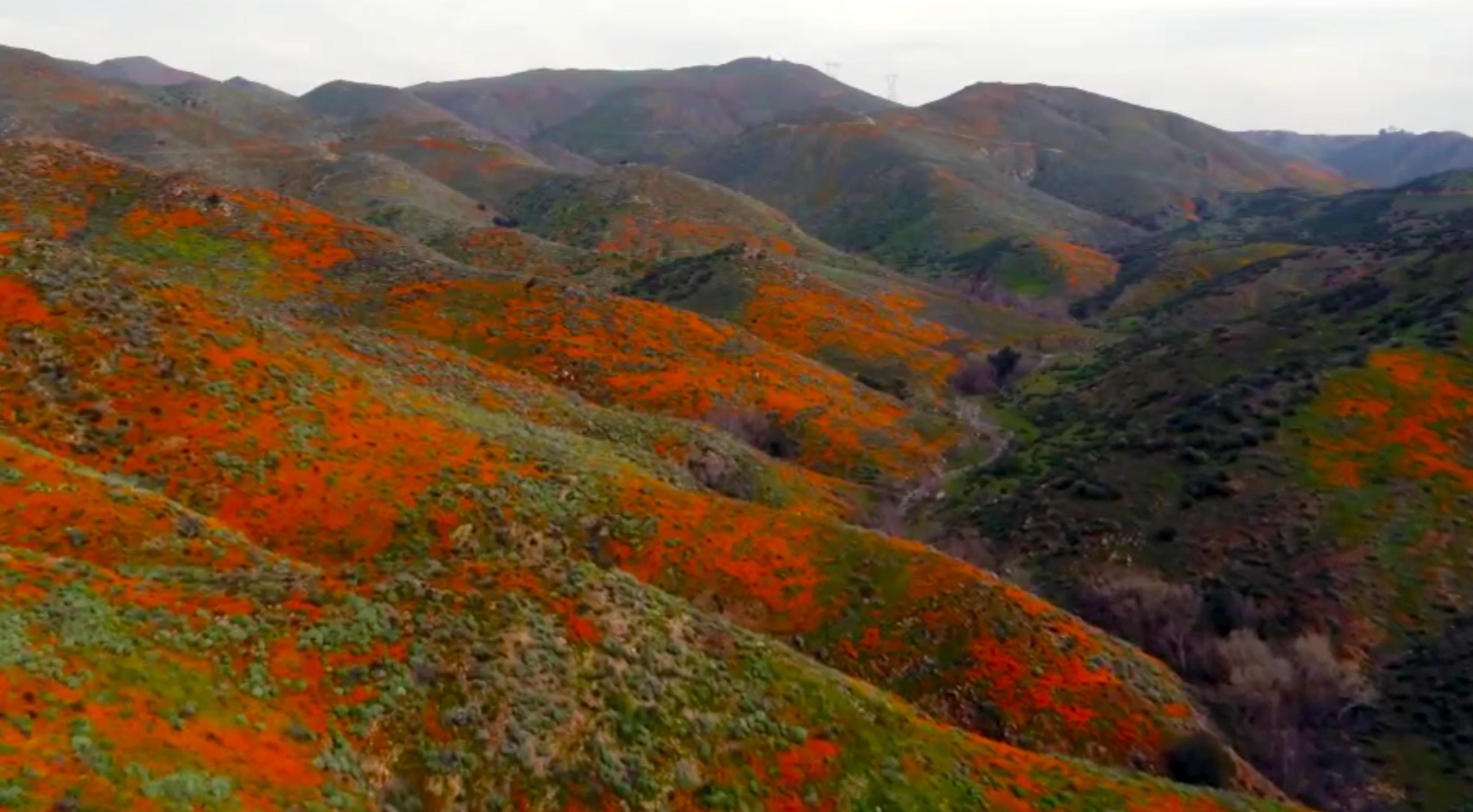 Image result for california superbloom