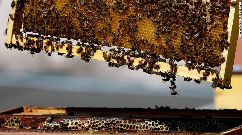 Even bees will benefit from 5G