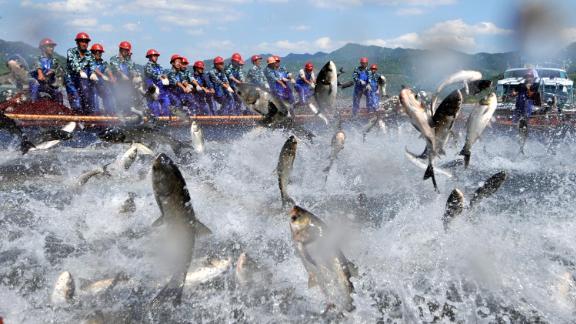 Fishermen gather to harvest fish in Hangzhou in eastern China.