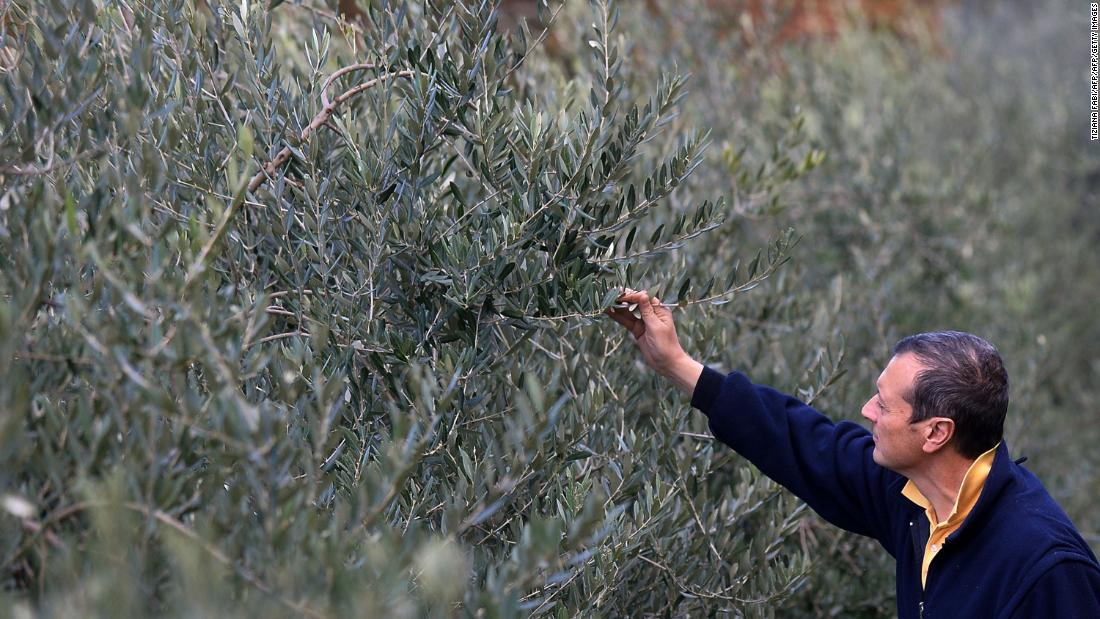 Lawmakers urge no new tariffs for European olive oil
