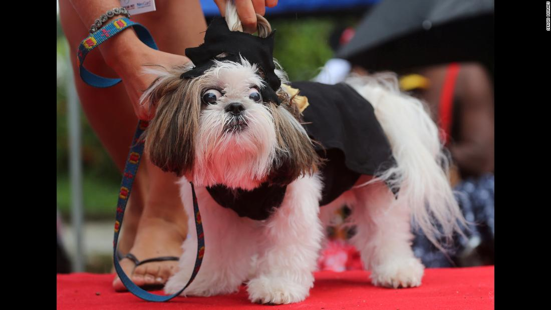 A dog is dressed up for Carnival festivities in Rio de Janeiro on Saturday, March 2.