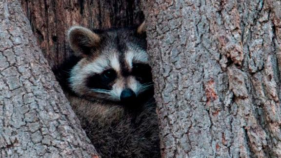 New York City health officials want you to keep your distance from these creatures and other wild animals that can carry rabies.