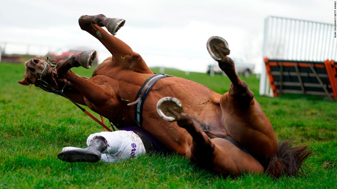Jockey Harry Kimber is pinned underneath his horse after toppling over the last hurdle at Wincanton Racecourse on Thursday, March 7, in Wincanton, England. Both the horse and the jockey were uninjured.