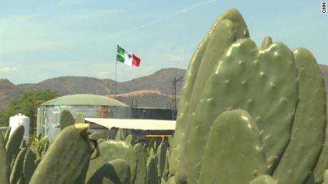 Cactus biofuel: Mexico's 'Green Gold'