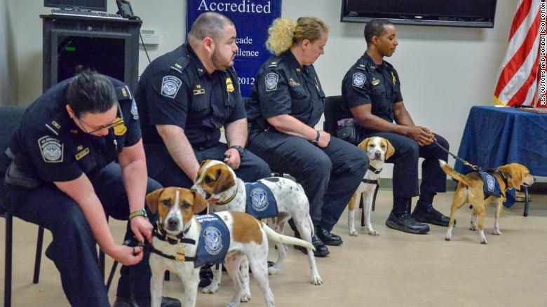Chaze, Cardie, Marlee and Chipper, as seen from left to right, graduate into the