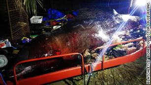 A dead whale containing 90 pounds of plastic is a message in a bottle