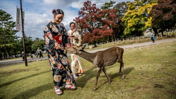 A group that monitors the welfare of the deer in famed Nara Park says several dead deer have been found with plastic in their stomachs.