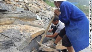Unknown species found in new treasure trove of fossils found in China