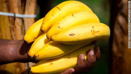 One large banana on average costs 160 liters of water.