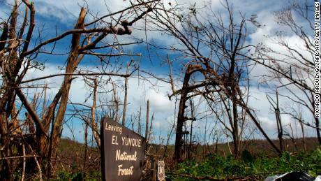 El Yunque National Forest after Hurricane Maria, on October 4, 2017.