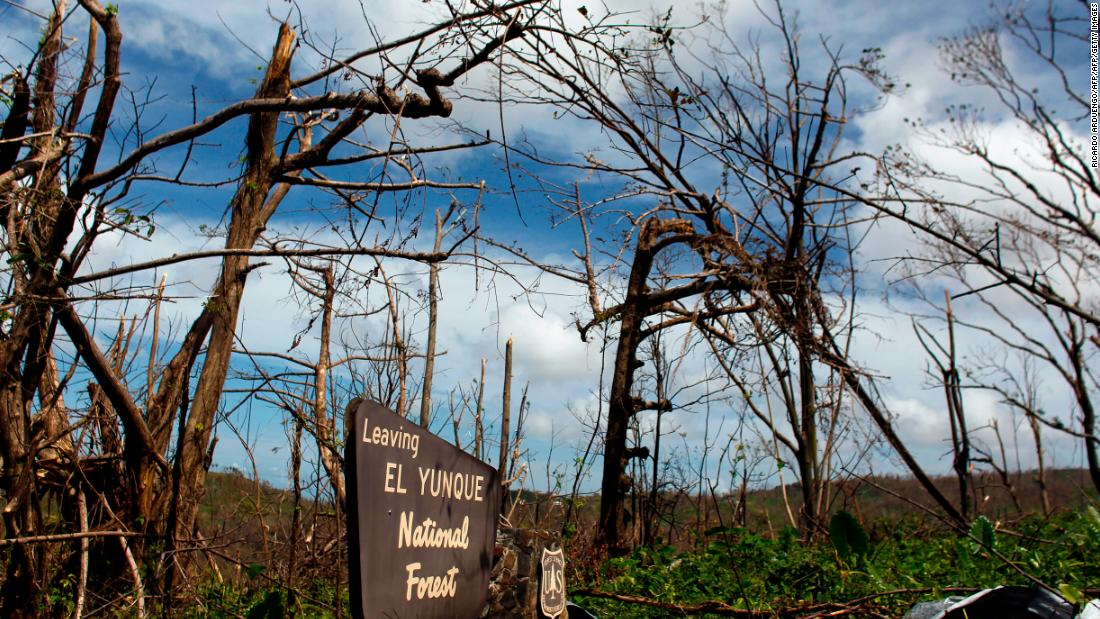 Stronger hurricanes could decimate forests and accelerate climate change, warns study