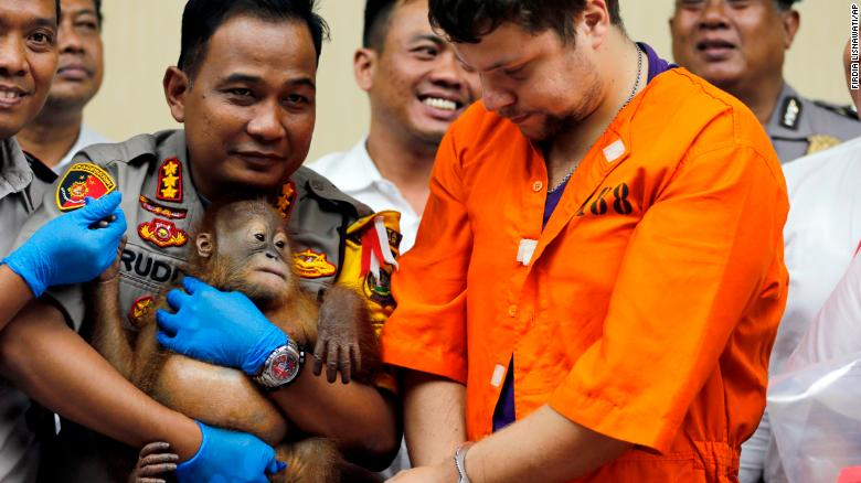 男子试图从巴厘岛用行李箱偷走小猩猩