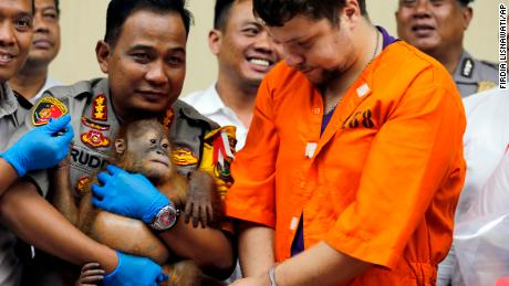 Denpasar police chief Ruddi Setiawan, center left, holds a two-year-old orangutan next to accused Russian Andrei Zhestkov, center right, in Bali on Monday.