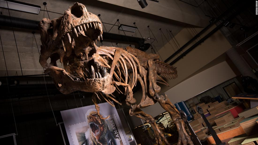 "The towering and battle-scarred ""Scotty"" is the world's largest Tyrannosaurus rex and the largest dinosaur skeleton ever found in Canada."