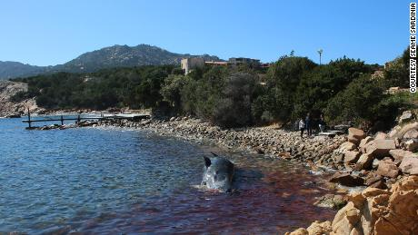 The dead animal was found in waters off the Sardinian tourist hotspot of Porto Cervo.