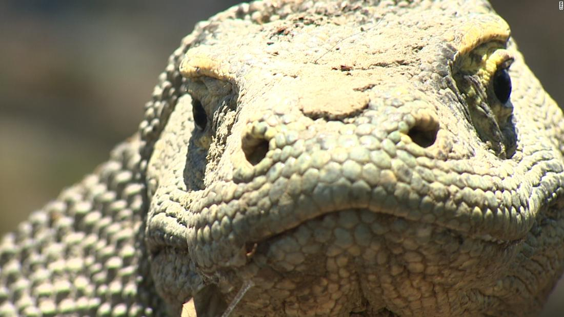 Indonesia's famed Komodo Island will limit tourism