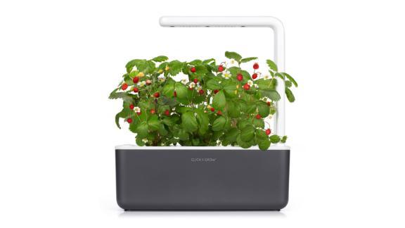"""<strong>Click & Grow Smart Garden 3 ($99.95; </strong><a href=""""https://click.linksynergy.com/deeplink?id=Fr/49/7rhGg&mid=1237&u1=0403mothersdaygiftsnordstrom&murl=https%3A%2F%2Fshop.nordstrom.com%2Fs%2Fclick-grow-smart-garden-3-self-watering-indoor-garden%2F5021535"""" target=""""_blank"""" target=""""_blank""""><strong>nordstrom.com</strong></a><strong>)</strong><br />"""