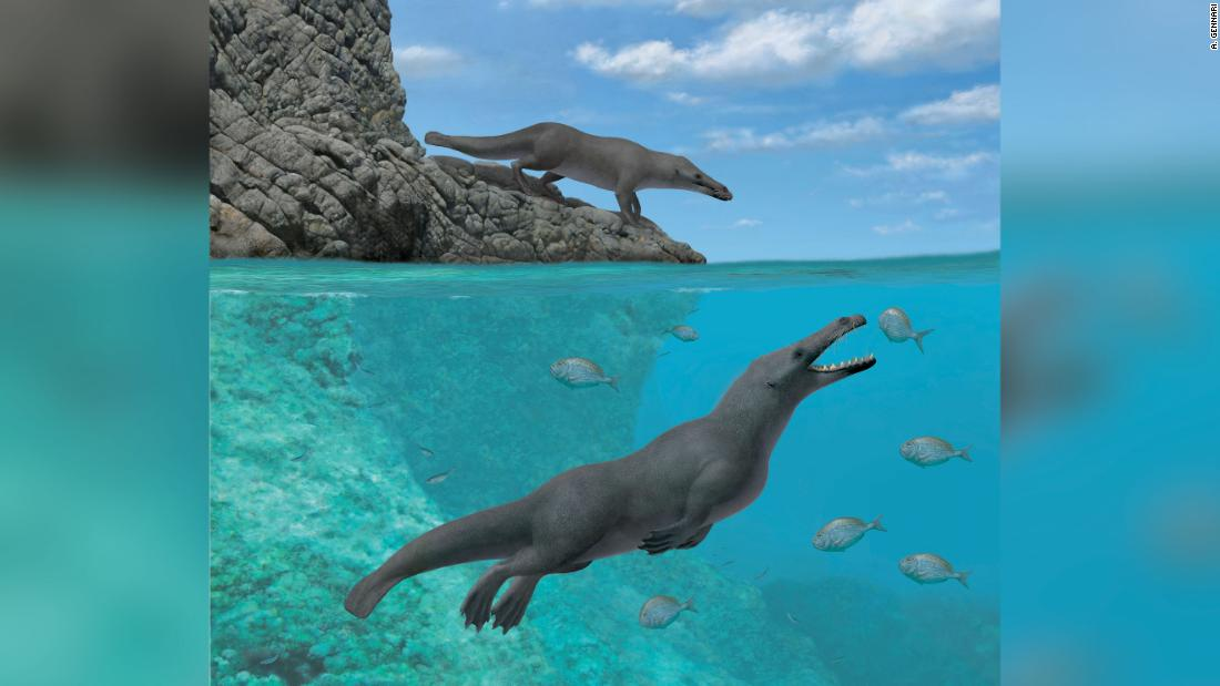 Ancient whales walked on four legs and moved like giant otters -- seriously
