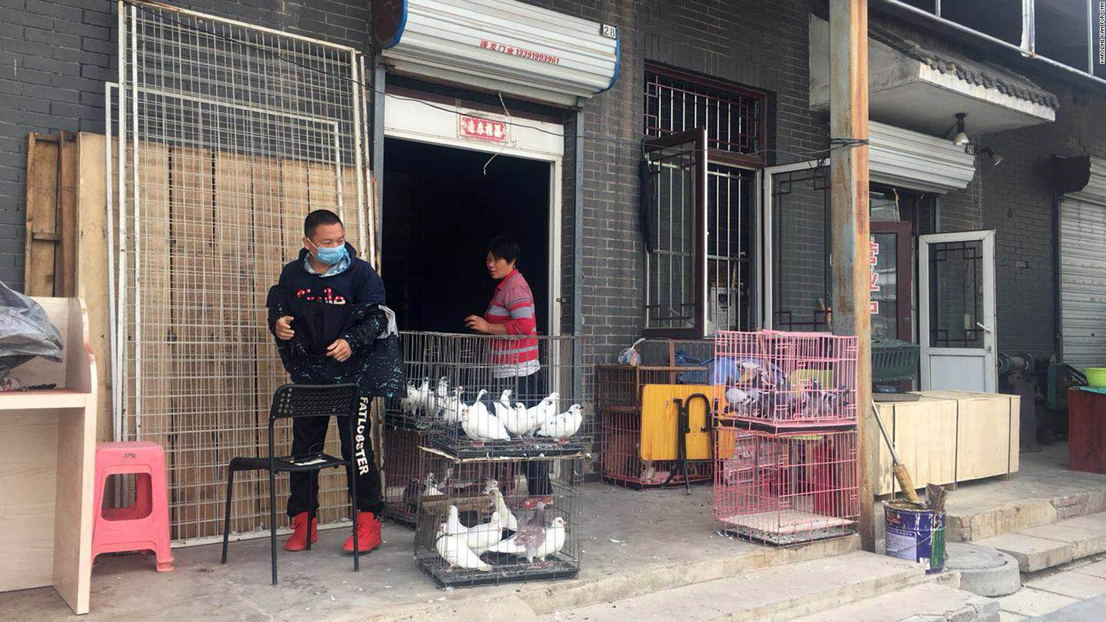 Inside the fascinating world of pigeon racing in China   CNN