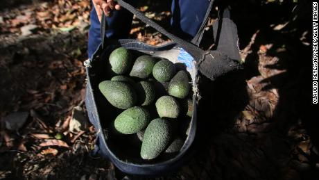 In Chile's arid Petorca, every cultivated hectare of avocados requires 100,000 liters of irrigated water a day.