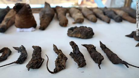 Archeologists found about 50 mummified animals in the tomb, including cats and mice.