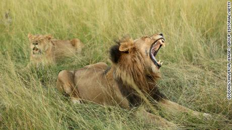 Suspected rhino poacher is killed by an elephant and then eaten by lions in South Africa